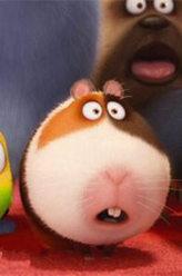 馒头(豚鼠)