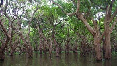 沼泽生态志