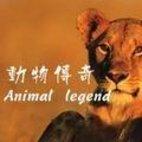 《动物传奇》海报